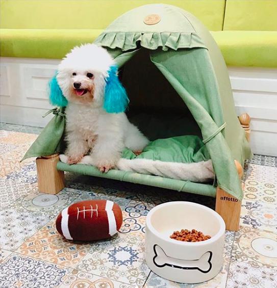 Kamar hotel anjing di Vodka & Latte