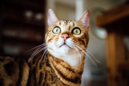 Tips Melatih Kucing Supaya Datang Saat Dipanggil