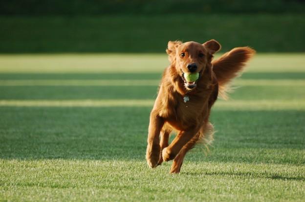 Anjing sehat, pasti semangat bermain
