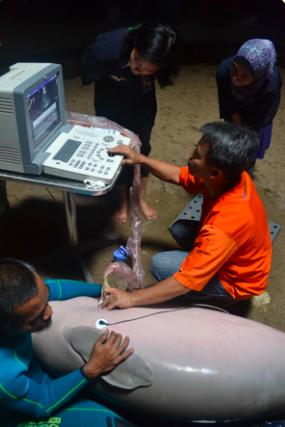 pemeriksaan hewan lumba-lumba oleh Prof Drh Deni Noviana, PhD, DAiCVIM