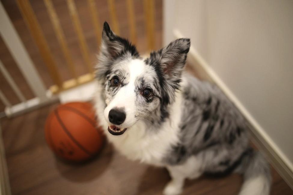 Pembatas dapat mencegah si doggie masuk ke area yang kurang aman baginya