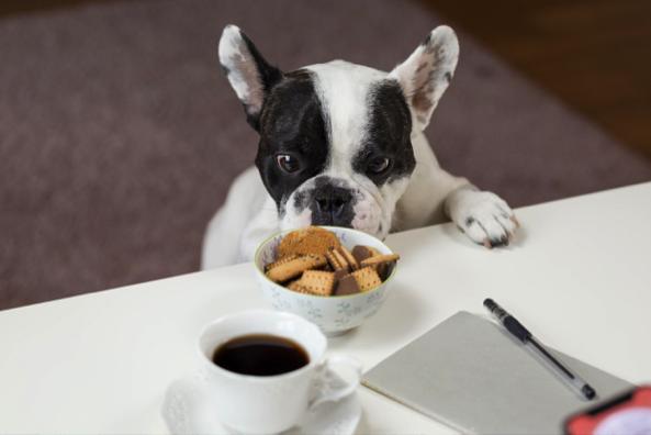Mengatur rutinitas jam makan pun perlu