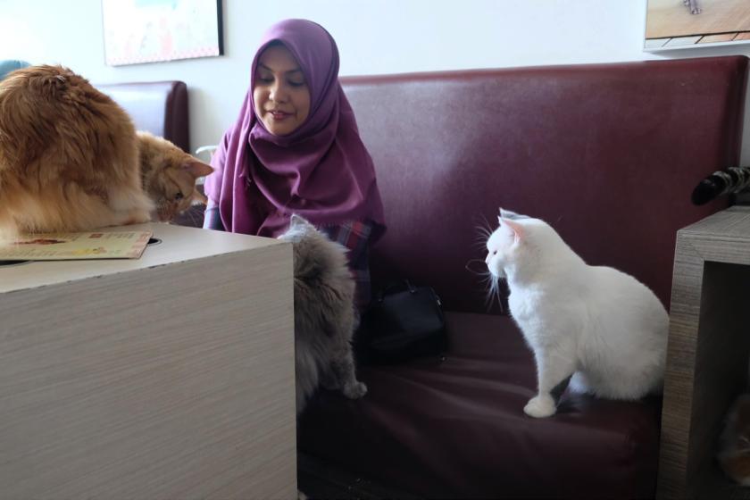 Pengunjung Cutie Cats Cafe, disapa kucing-kucing nan ramah.