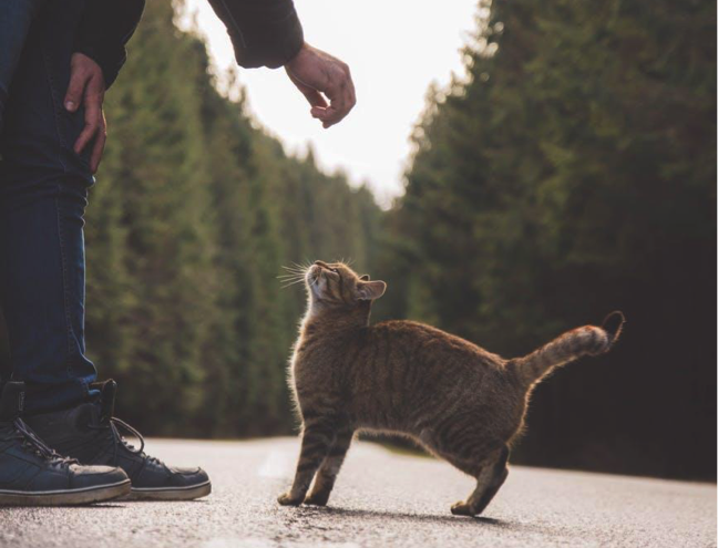 Main di luar rumah, kucing bisa makan serangga atau makanan dari orang lain
