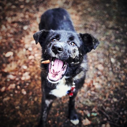 Anjing Anda cepat menggeram dan galak