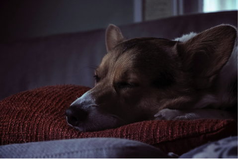 Jam tidurnya jadi panjang sekali