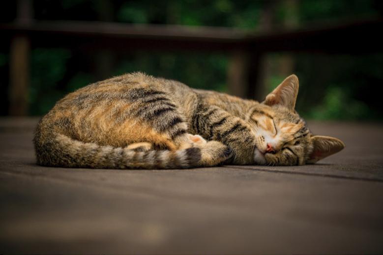 Perhatikan setiap gejala infeksi toksoplasma pada kucing.