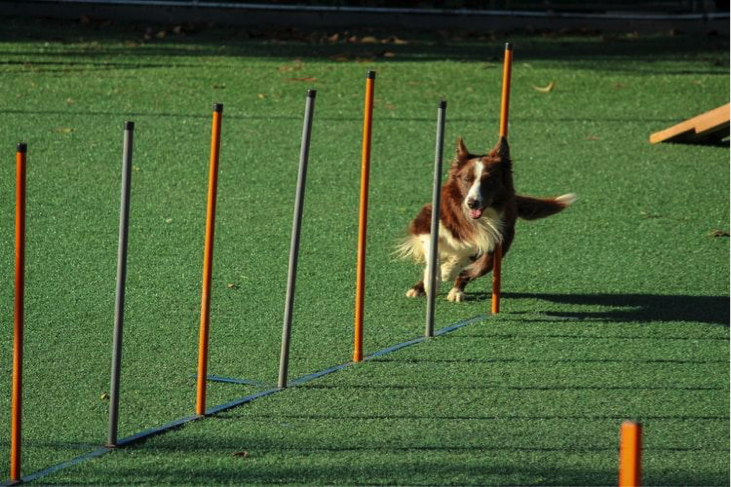 Jaga bobot badan kucing atau anjing dengan aktivitas fisik secara rutin