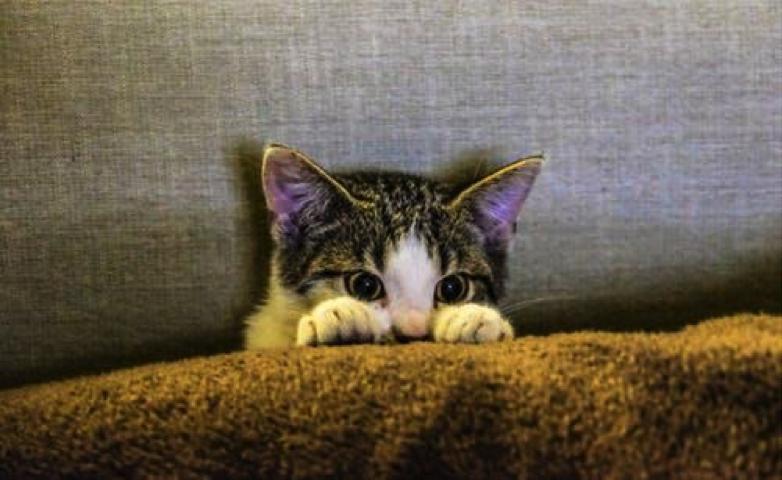 Karantina mandiri selama pandemi COVID-19 bisa membuat kucing stres di rumah