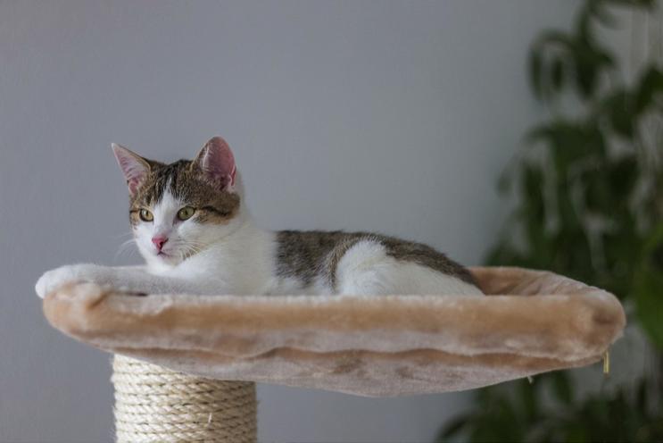 Cat tree atau pohon kucing bisa membantu kucing merasa nyaman