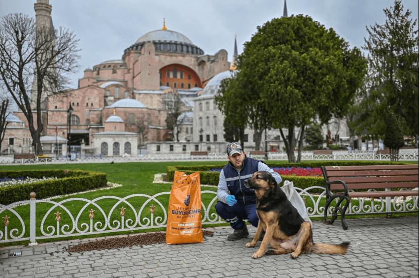 Seorang anggota pemerintah Kota Metropolitan Istanbul memberi makan anjing liar di masa pandemi Covid-19