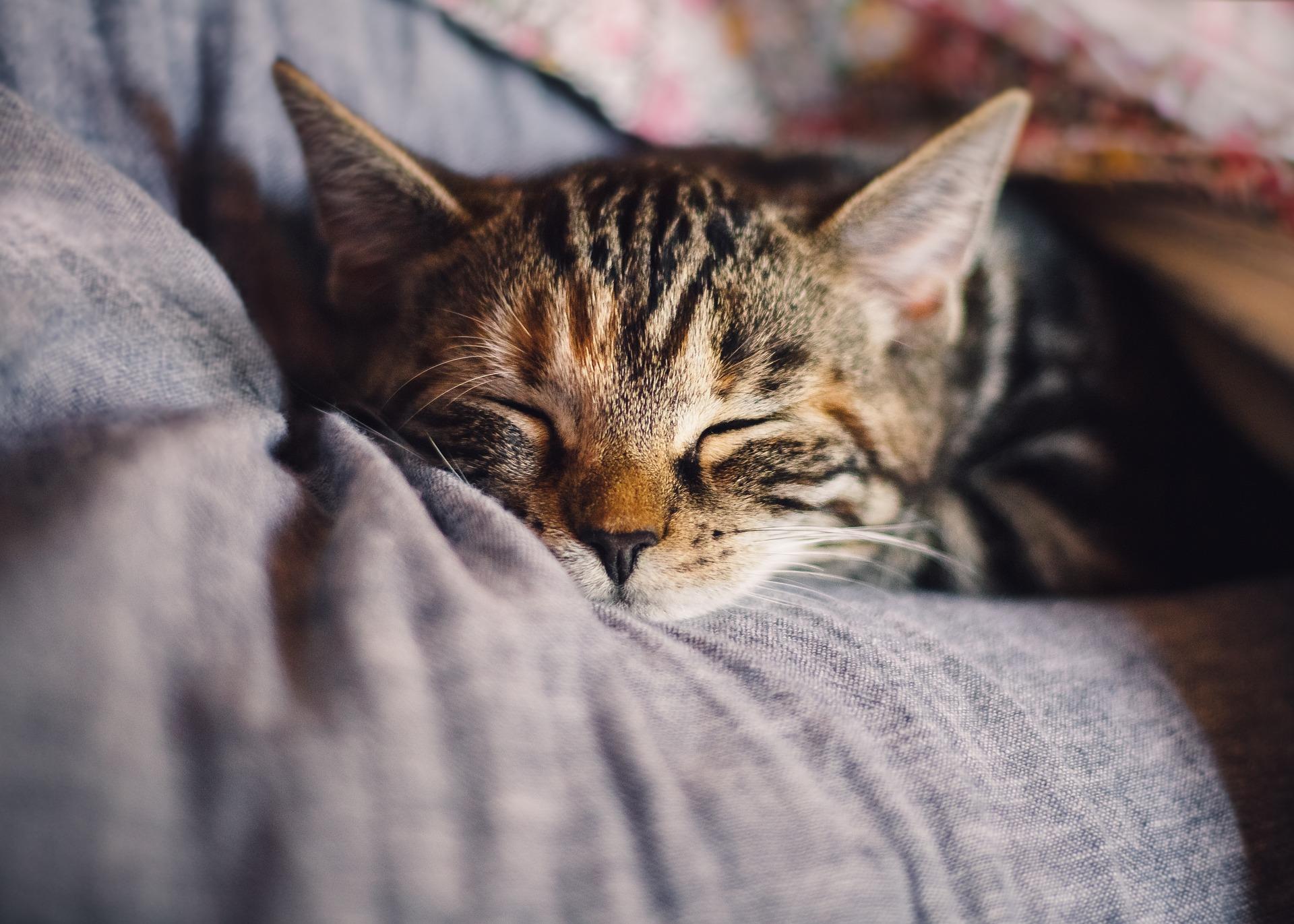 Setelah operasi steril, kucing perlu banyak istirahat