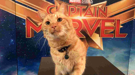 Reggie, Si Goose The Cat di Film Captain Marvel