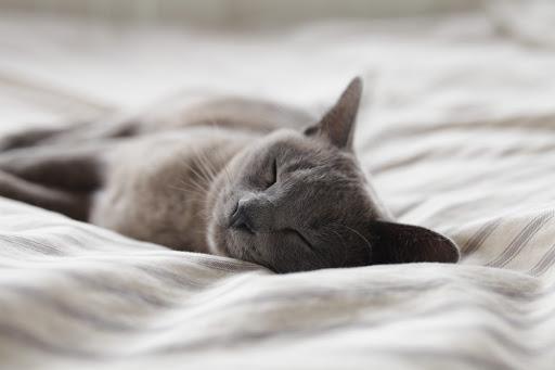 5 Penyakit Mematikan bagi Kucing