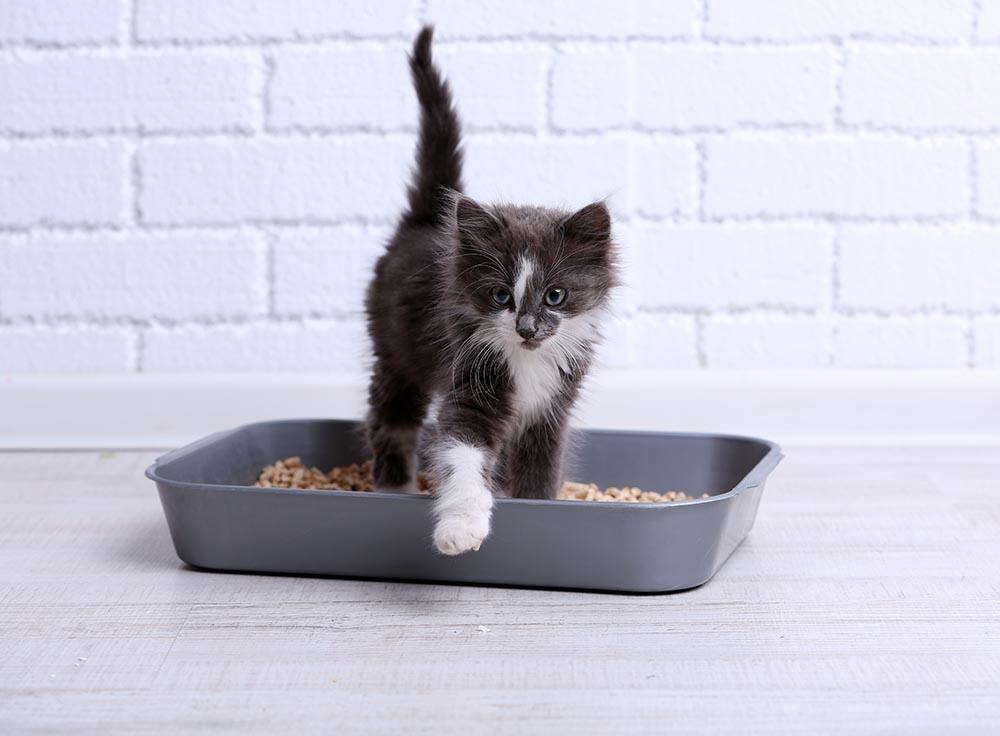 6 Tips Sukses Toilet Training untuk Anak Kucing