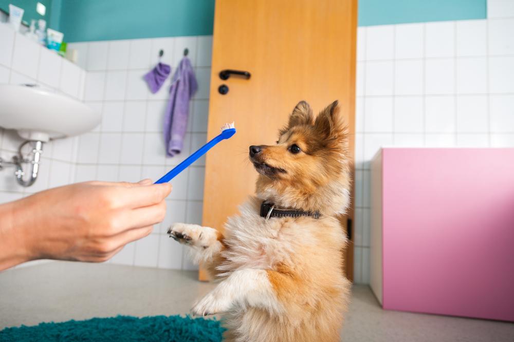 paw friends, Ini Cara Menyikat Gigi Anjing yang Tepat