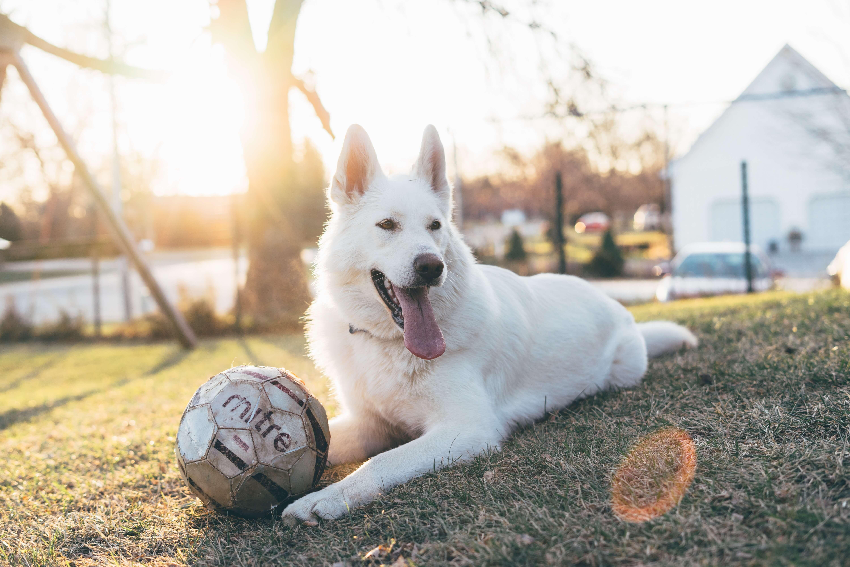 Perhatikan 7 Etiket Ini Saat Membawa Anjing ke Dog Park
