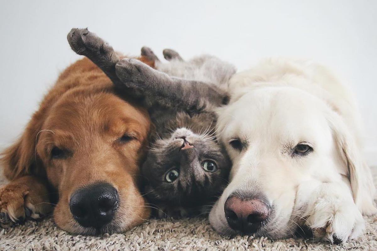 Watson, Kiko, Harry: Persaudaraan Anjing dan Kucing