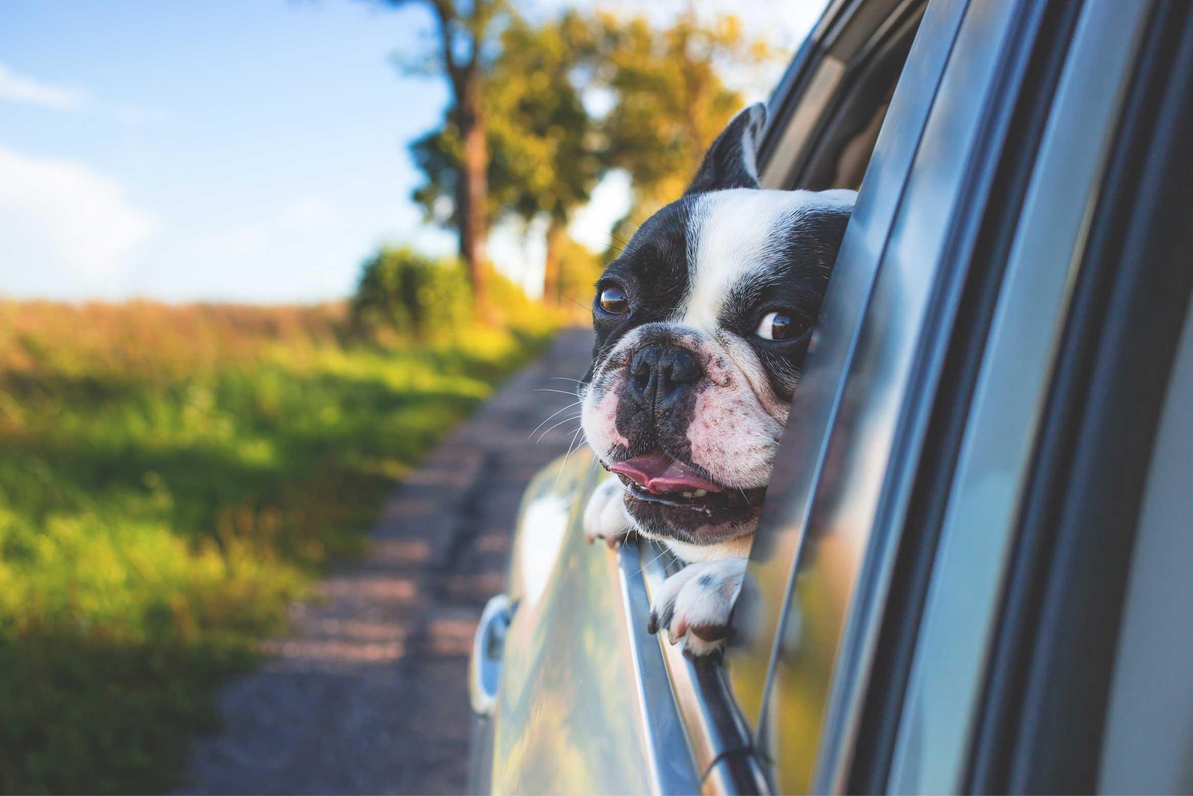 8 Tips Liburan Road Trip Bersama Anjing Kesayangan