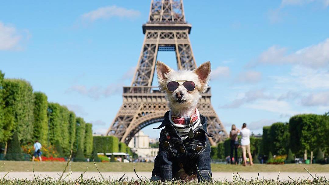 Ella Bean: Dari Anjing Malang, Jadi Anjing Paling Stylish di Instagram!