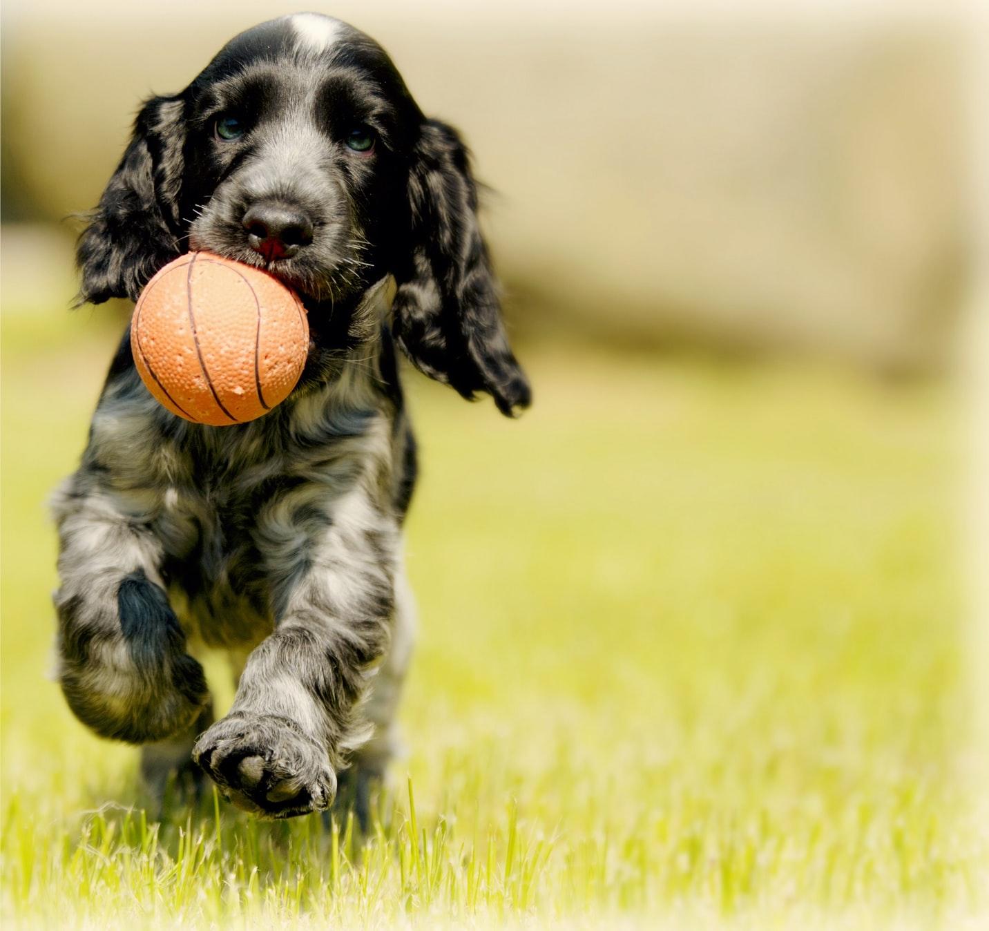 10 Ide Olahraga Menyenangkan untuk Anjing
