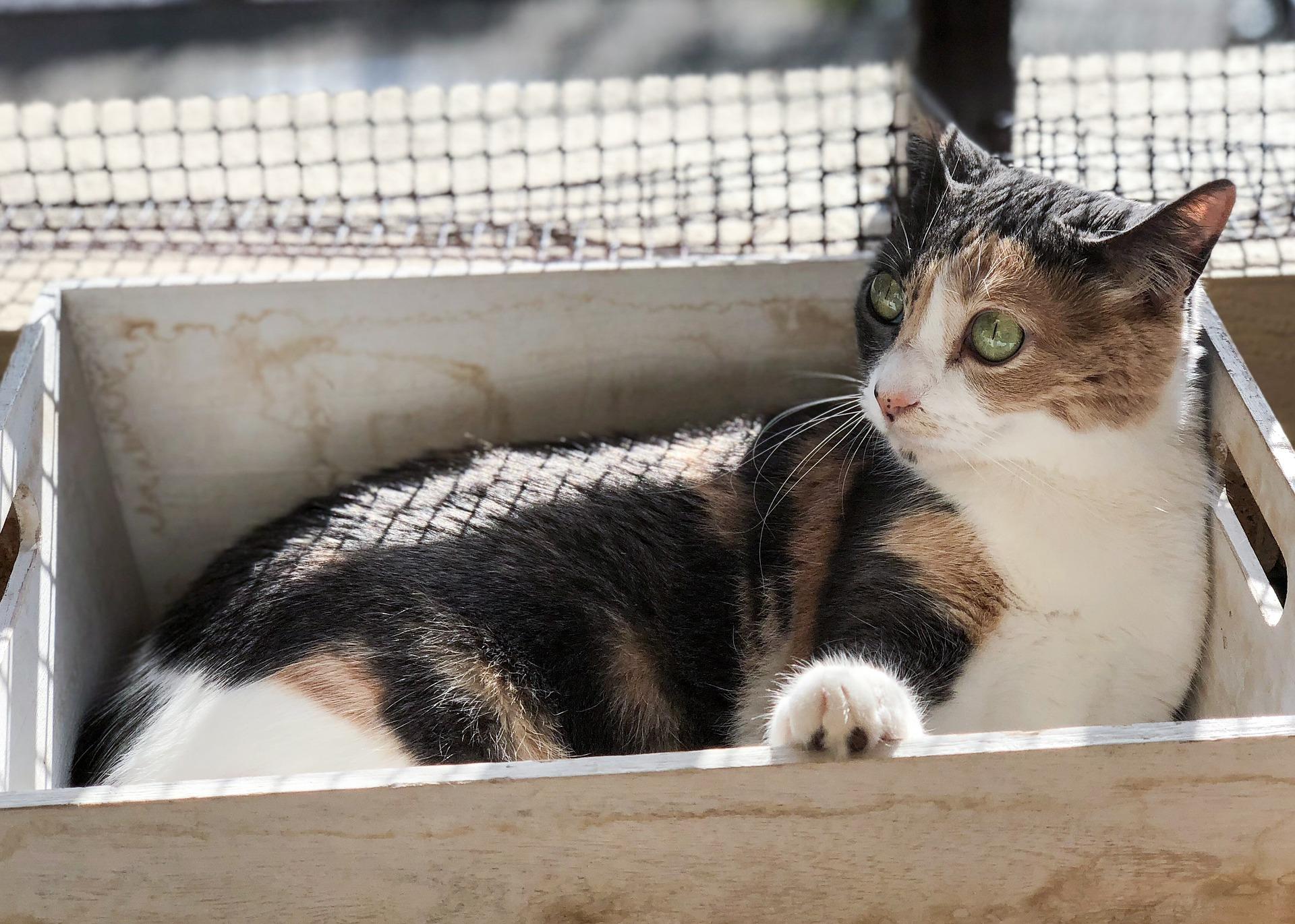 Stop Aroma Tak Sedap! Ini Cara Membersihkan Kotak Kotoran Kucing