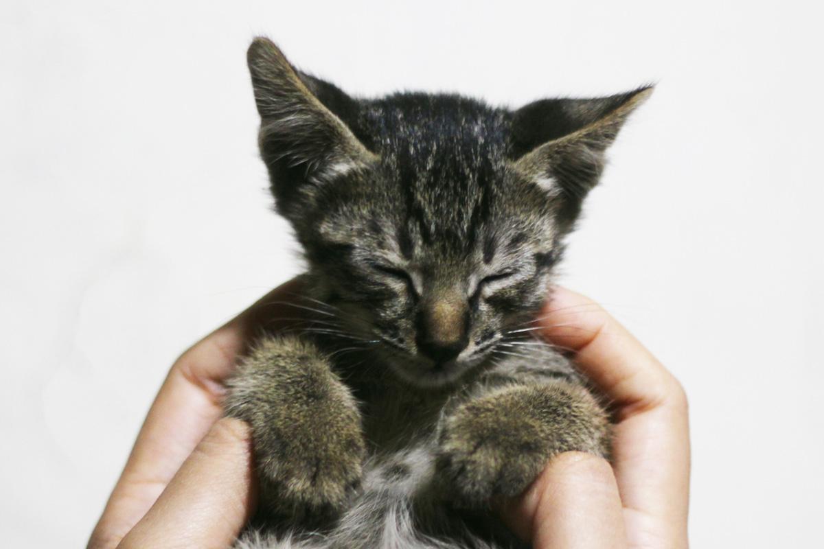Qory Purnamasari, Merawat Kucing Liar yang Sehat dan Cacat