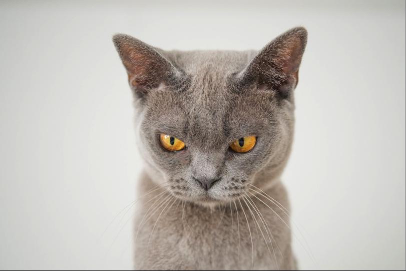 paw Friends, Kenali 9 Tanda Kucing Tidak Bahagia
