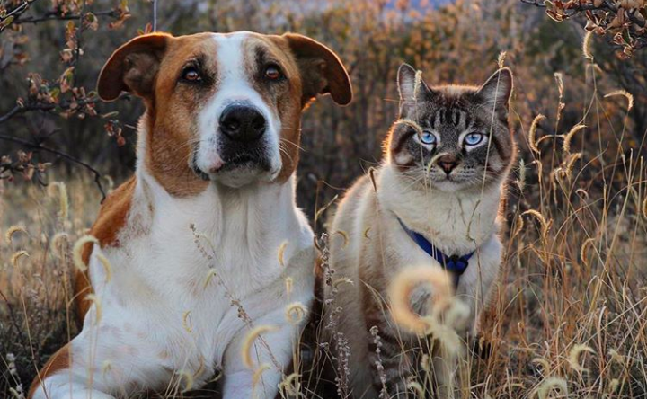 Gemasnya Henry dan Baloo, Anjing & Kucing yang Suka Bertualang