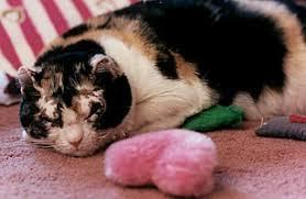 Scarlett, Ibu Kucing yang Menyelamatkan Lima Anaknya dari Api