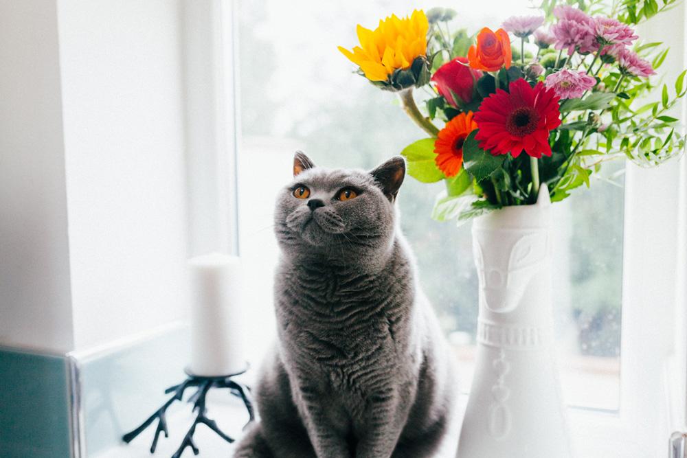Ini Cara Jitu Hilangkan Bau Pipis Kucing