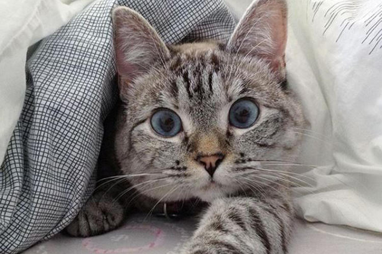 Nala Cat, Kucing Penerima Penghargaan Guinness World Records